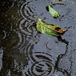 Thumbnail: water in a puddle