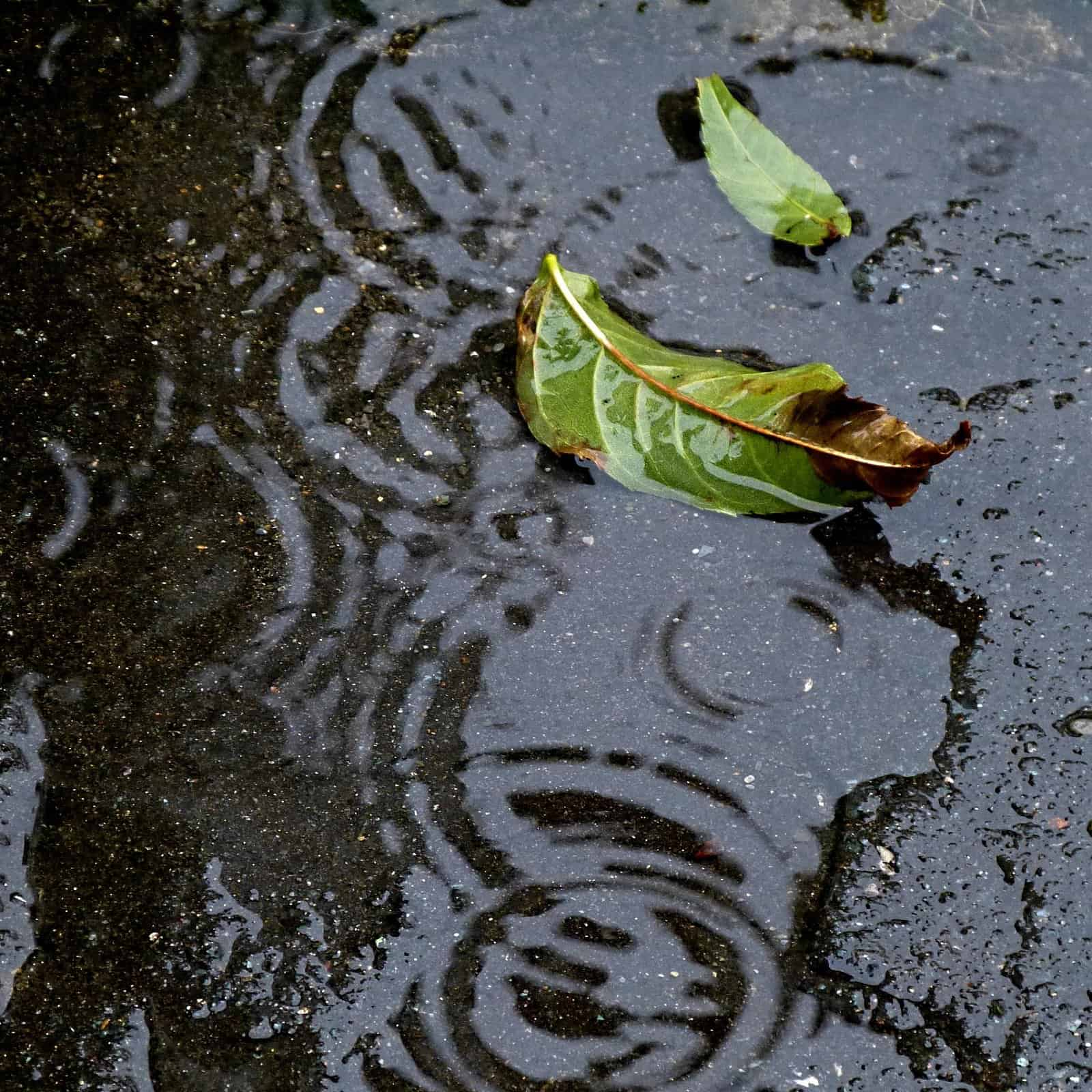 Close-up photo of raindrops in a puddle