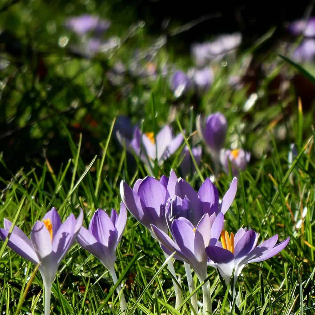 Spring flowers - the hope that's inherent in nature's resilience